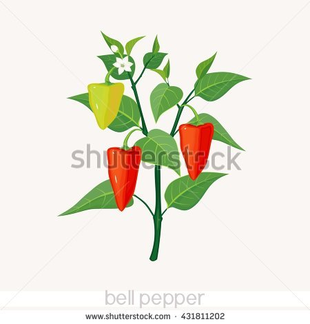 Pepper Plant Stock Images, Royalty.