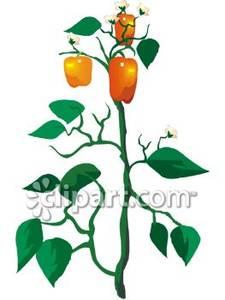 Pepper Plant Clipart.