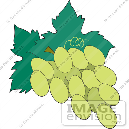 Clipart of a Green Grape Cluster on the Vine.