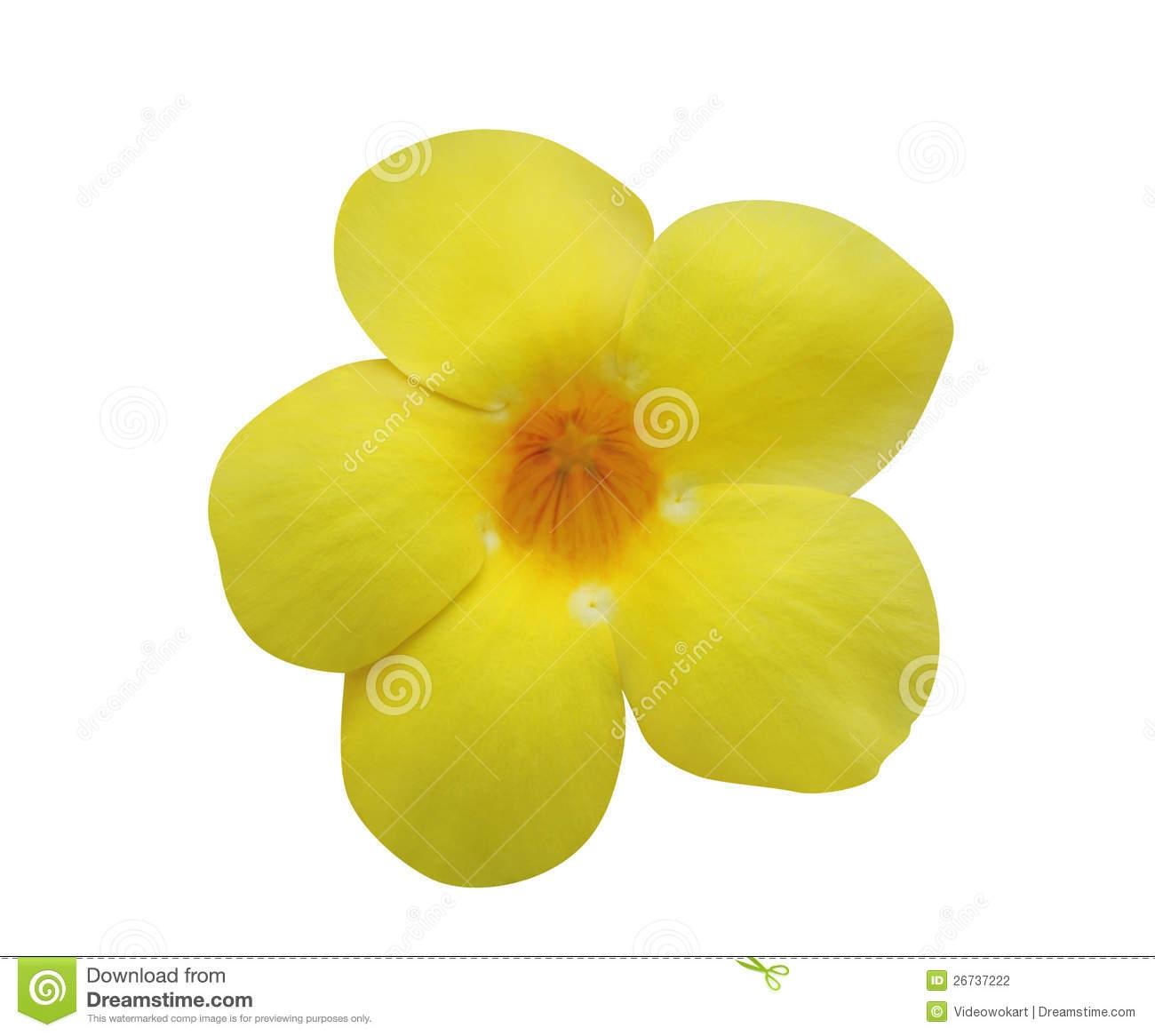 Yellow bell flower clipart.
