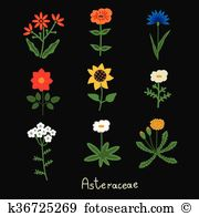 Bellis Clip Art Royalty Free. 10 bellis clipart vector EPS.
