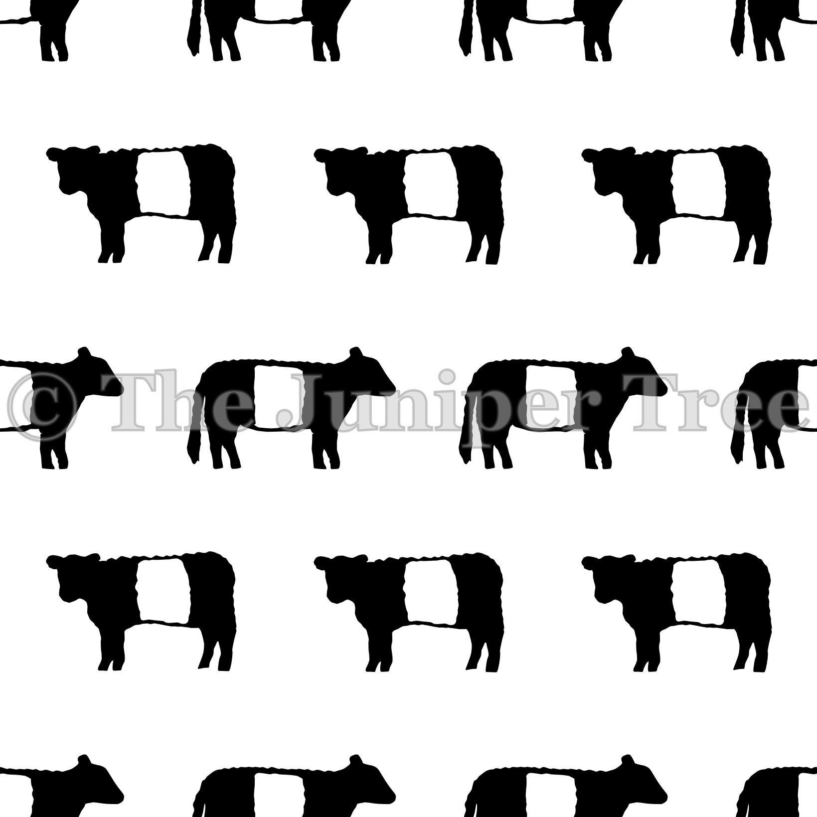 Belted Galloway Cows.