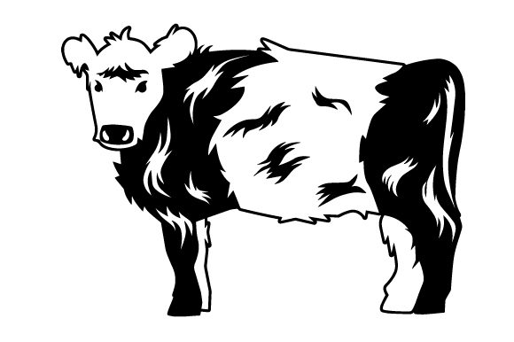 Belted Galloway Cow.