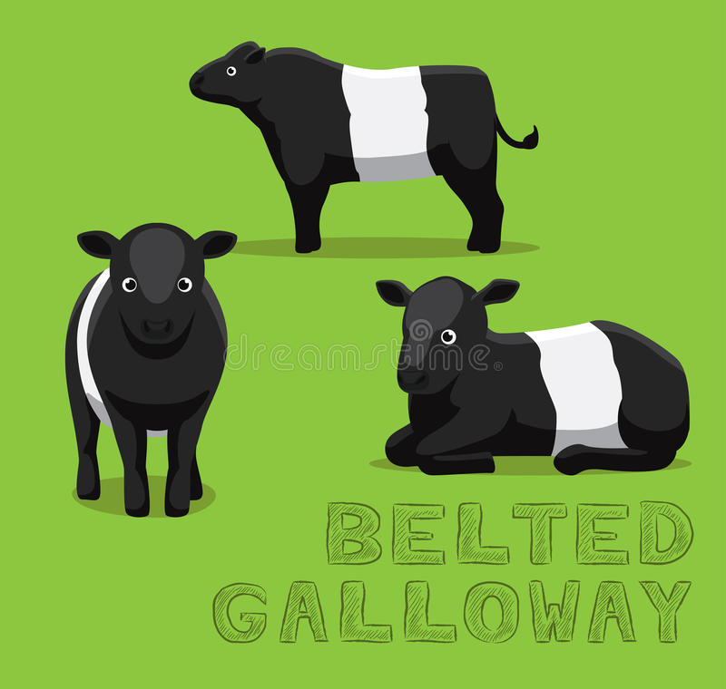 Belted Galloway Stock Illustrations.