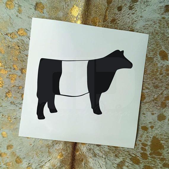 Show Cattle Belted Galloway Heifer Vinyl Sticker.