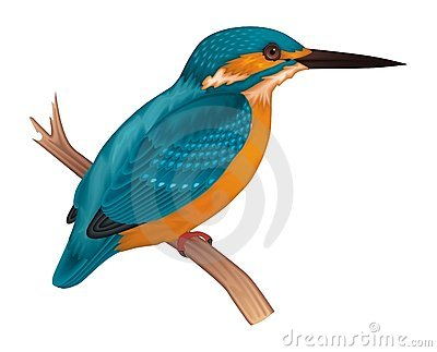 Belted kingfisher clip art.