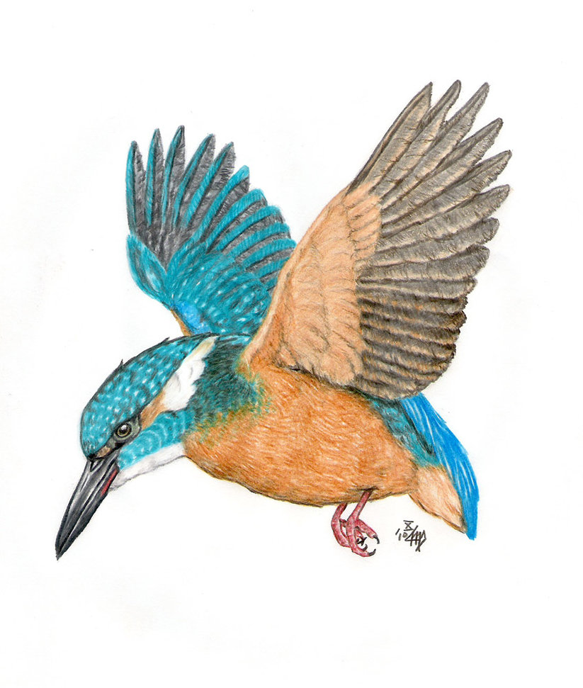 Kingfisher Clipart.