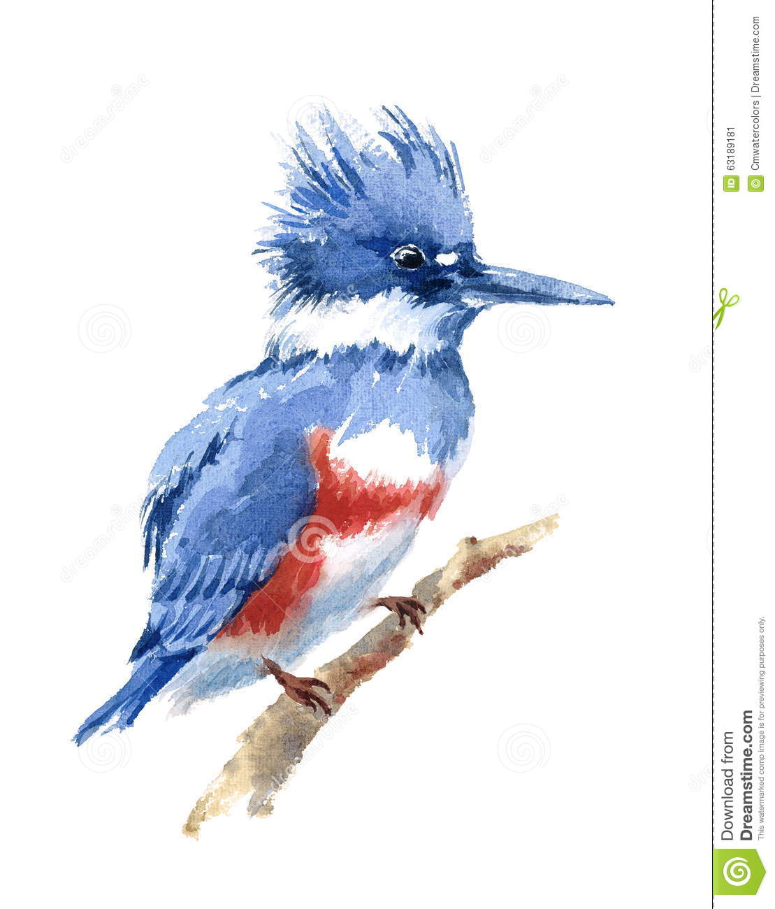 Belted Kingfisher Bird Watercolor Illustration Hand Drawn Stock.