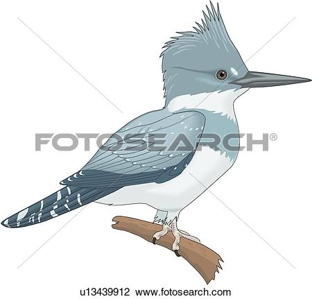 Clipart of Belted Kingfisher u13439912.