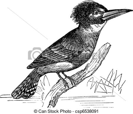 Vector Clip Art of Belted Kingfisher or Megaceryle alcyon vintage.