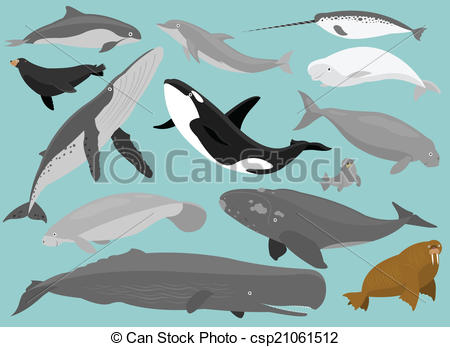 Beluga Clipart Vector and Illustration. 118 Beluga clip art vector.