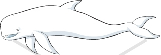 Beluga Whale Cartoon.