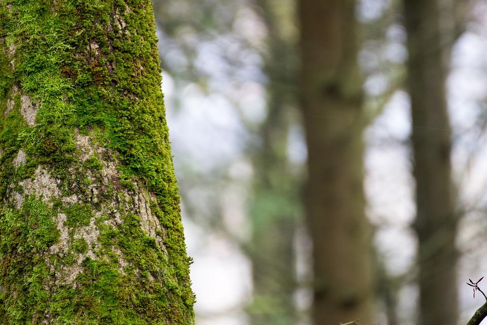 Free photo Tree Moss Log Bemoost Old Rot.