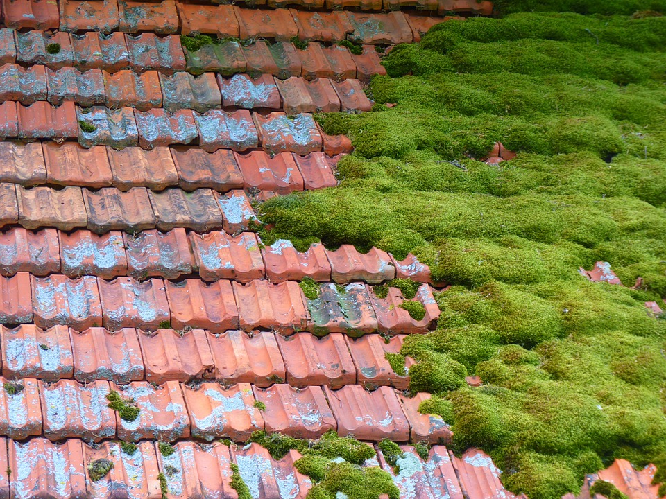 Free photo: Hut, Roof, Moss, Bemoost Old, Barn.