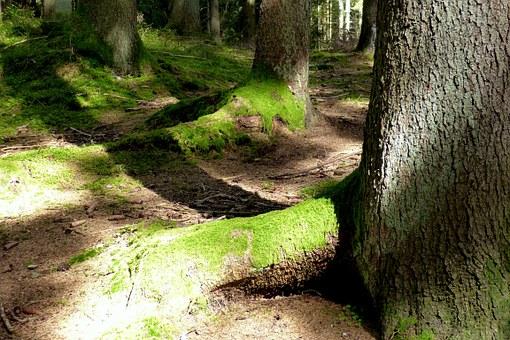 Tree, Root.