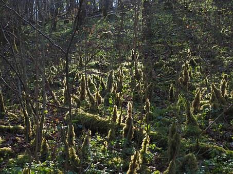 Undergrowth.