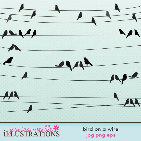 1000+ images about birds sitting on a wire on Pinterest.