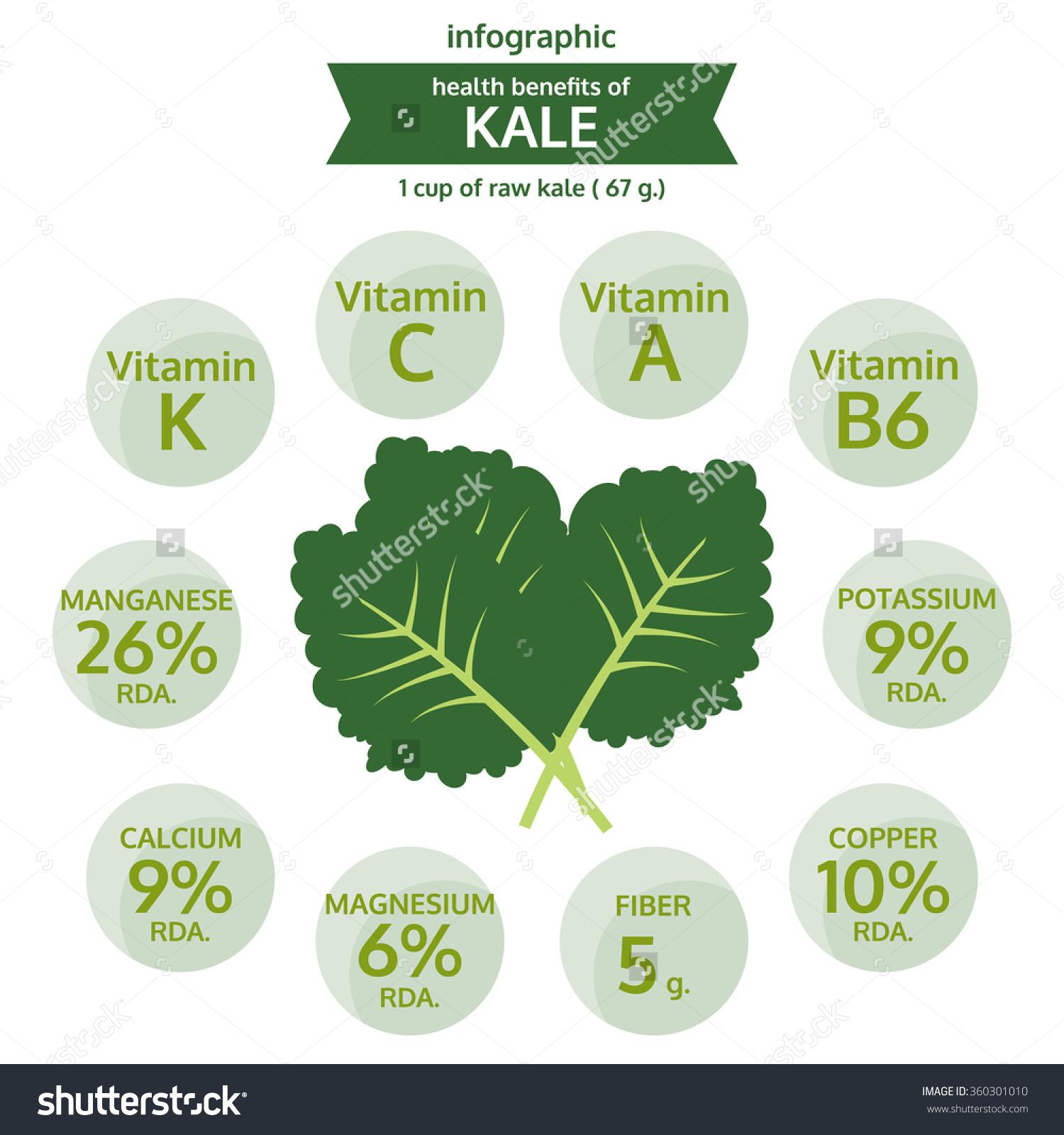 Benefit Health Kale Info Graphic Food Stock Vector 360301010.
