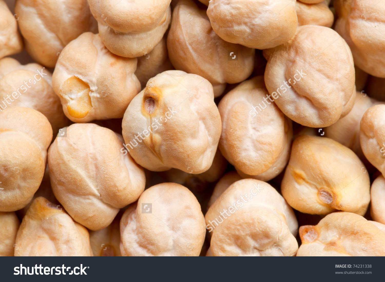 Chickpea Cicer Arietinum Garbanzo Bean Indian Stock Photo 74231338.
