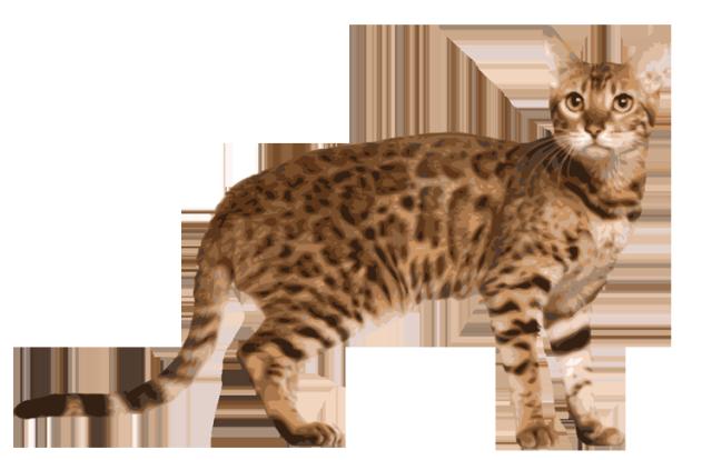 Bengal cat clipart.