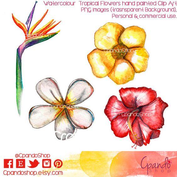 Tropical Flowers 4 clip art (png images transparent background.