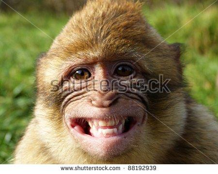 Barbary Macaque Stock Photos, Royalty.