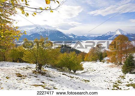 Picture of Beech trees on polar landscape, Mt Watzmann, Steinernes.