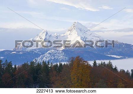 Stock Photo of Trees in forest, Mt Watzmann, Steinernes Meer.