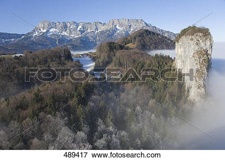 Picture of High angle view of trees in forest, Untersberg, Bavaria.