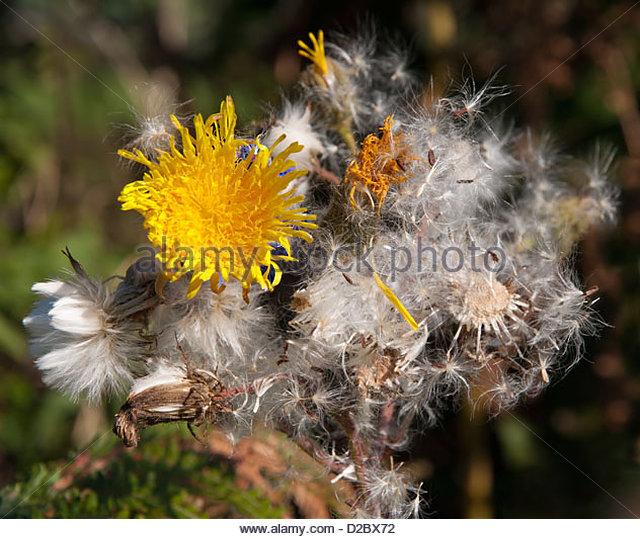 Tracheophyta Stock Photos & Tracheophyta Stock Images.