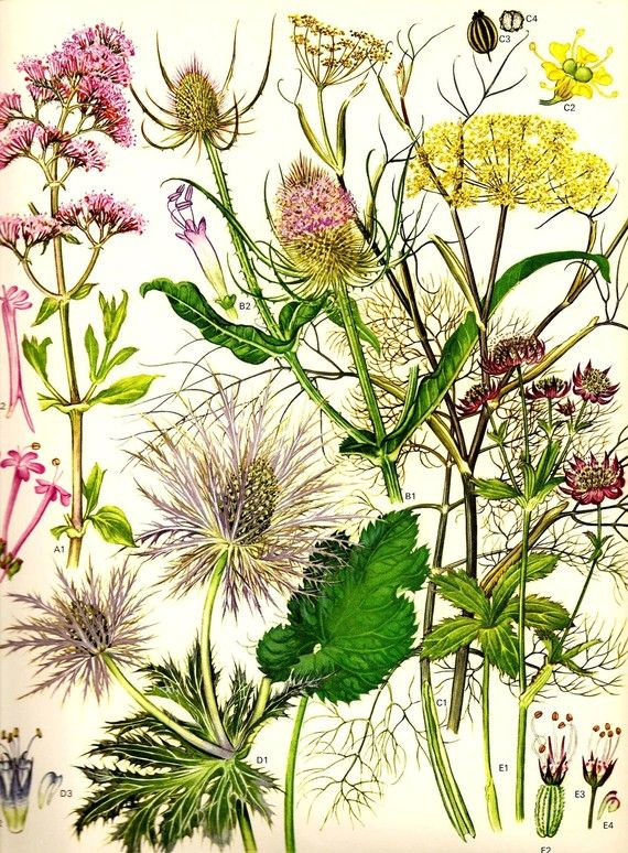 1000+ images about Botanical Creativity on Pinterest.