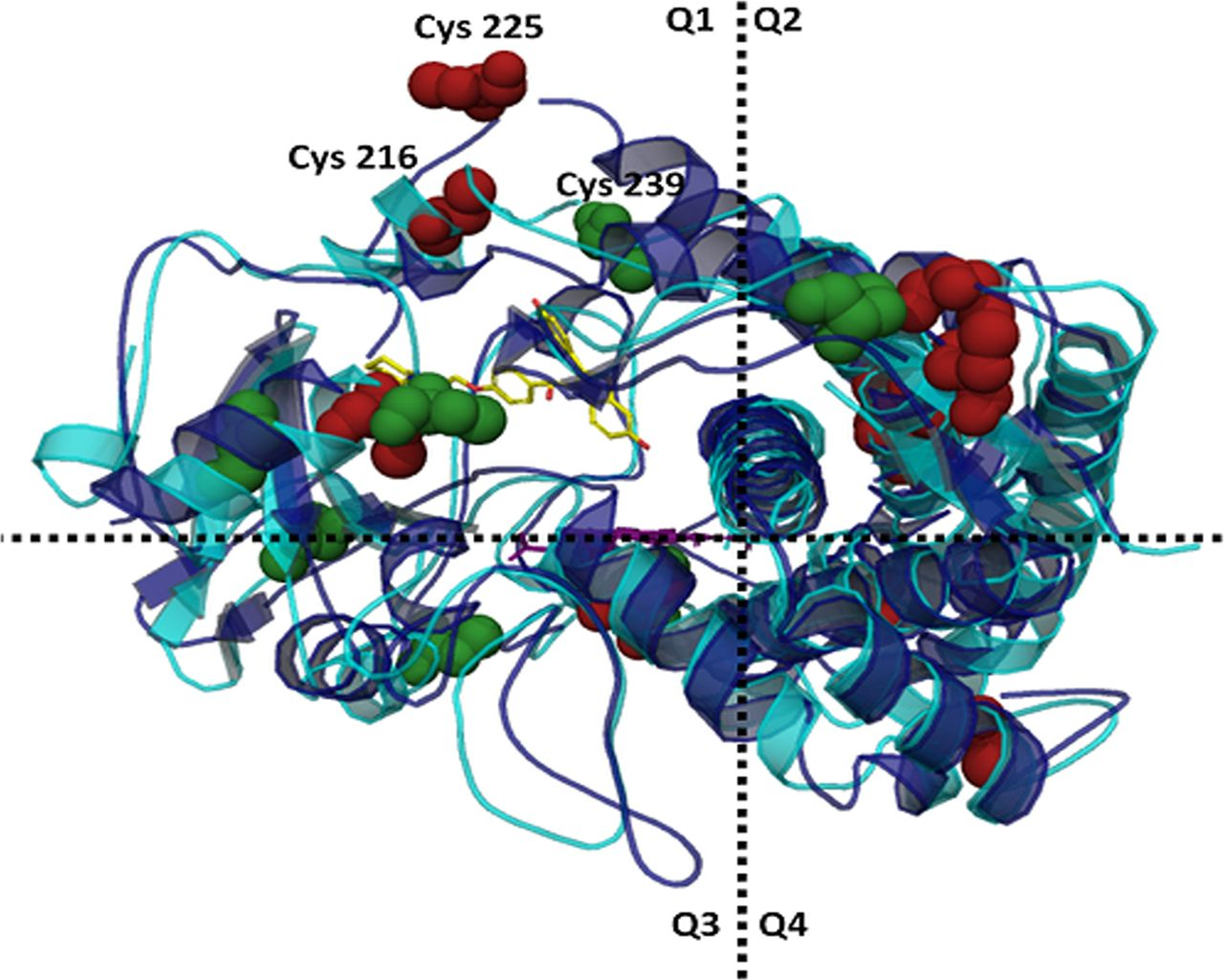 Cytochrome P450 Architecture and Cysteine Nucleophile Placement.