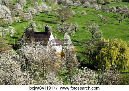 Picture of Cherry blossom, Berghauser Matten, Berghaus Chapel.