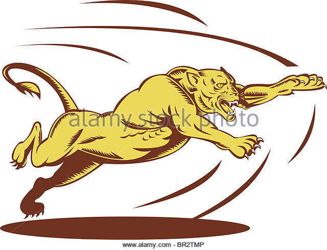 Leaping Puma Stock Photos & Leaping Puma Stock Images.