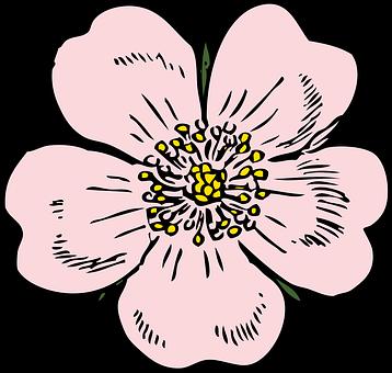 Rose, Apple.
