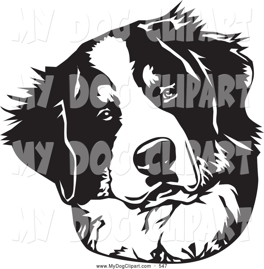Clip Art of a Cute Curious Bernese Mountain Dog Tilting His Head.