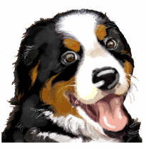 Bernese mountain dogs Graphics and Animated Gifs.