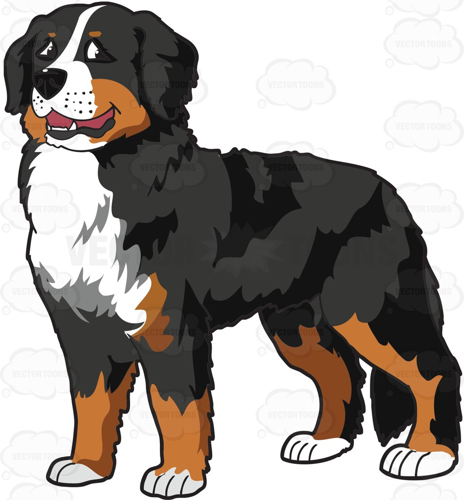 Bernese mountain dog clipart.