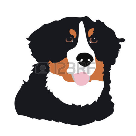 103 Bernese Mountain Dog Stock Vector Illustration And Royalty.