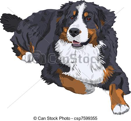 Clipart Vector of vector Bernese Mountain Dog breed.