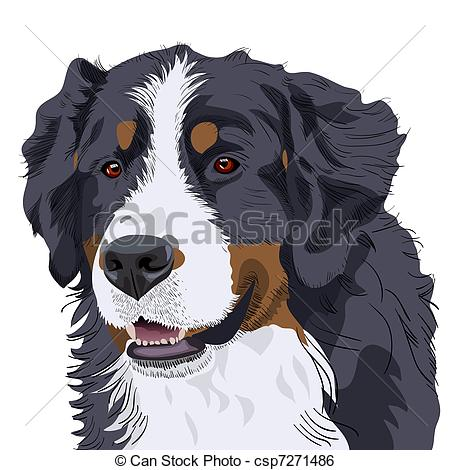 Clip Art Vector of vector Bernese Mountain Dog breed.