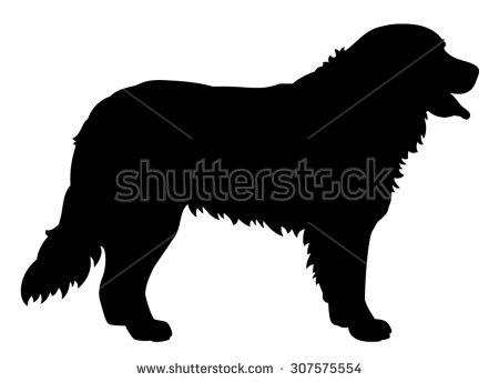 Bernese Mountain Dog Stock Photos, Royalty.