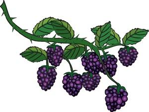 Berries Clipart.