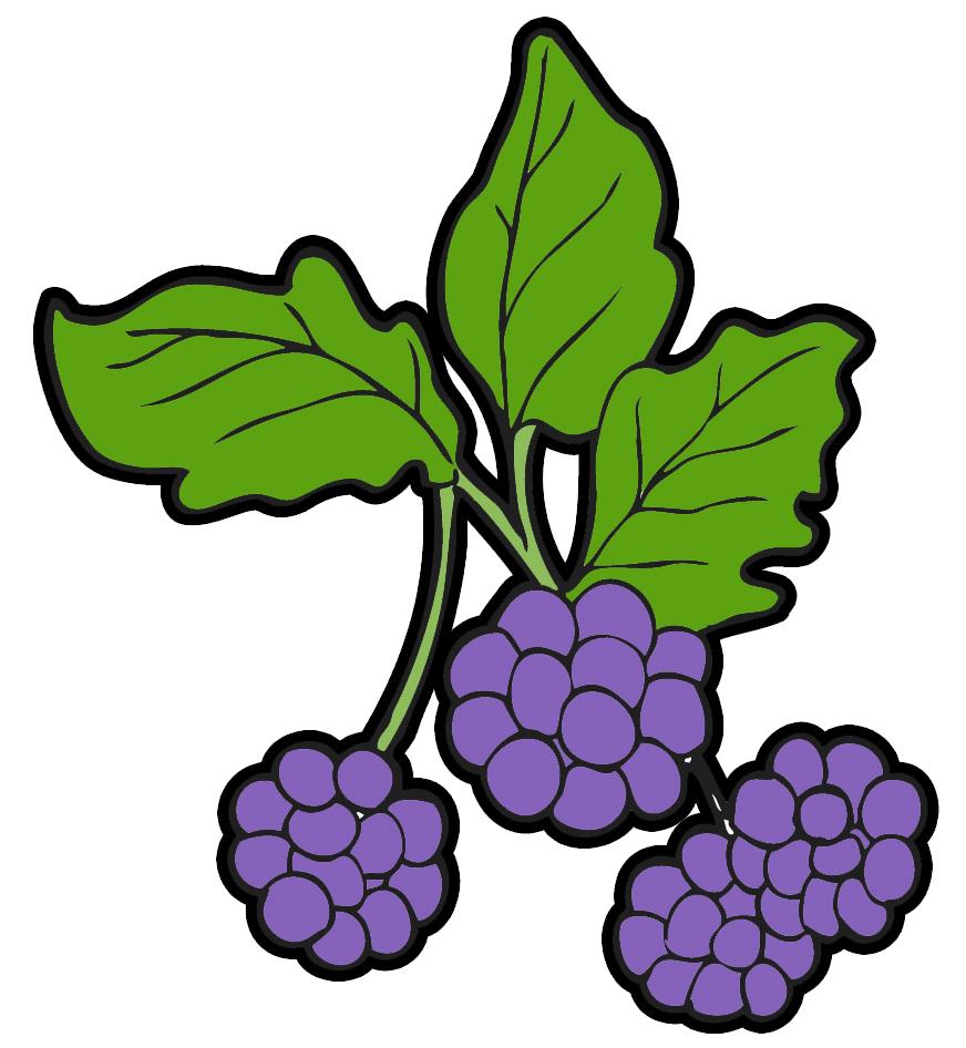 Clipart berries.