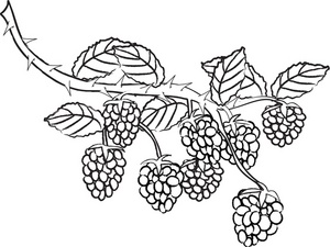 Free Berries Clipart Black And White, Download Free Clip Art.