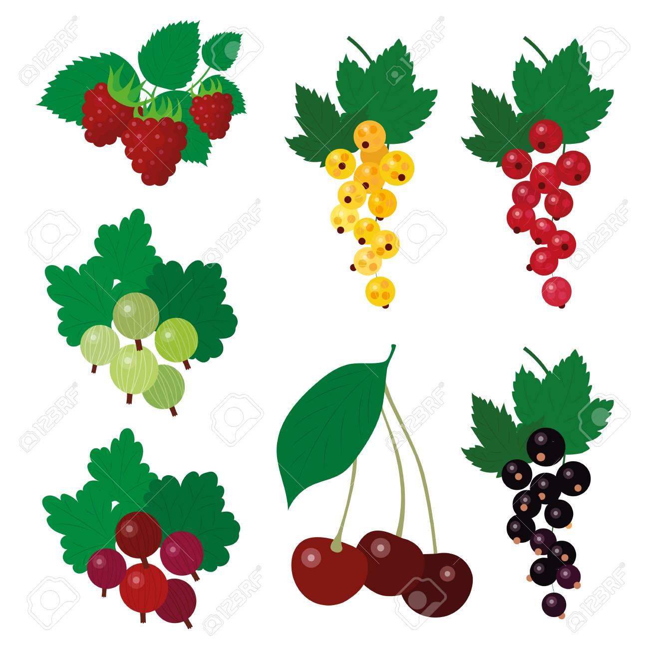 Beautiful simple garden berries fruit harvest summer clipart.
