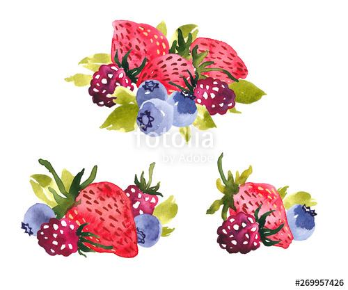 berries clip art #6