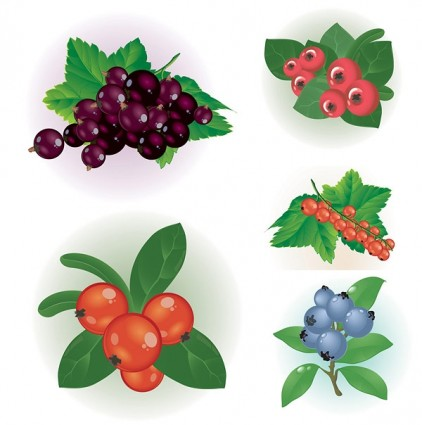 Small Red Berries Clip Art.