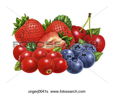 Stock Illustration of A Group of Blueberries ungerj0049s.