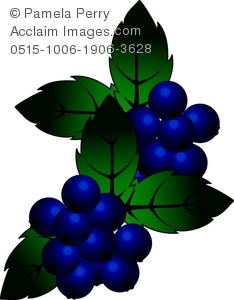 Clip Art Illustration of a Cluster of Blueberries With Leaves.